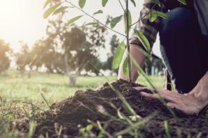 Forstfreunde-UNDERCONTROL-CO2-Projekt